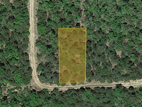 Forested Land Near The Lake : Diamond : Boone County : Arkansas