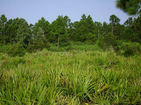 4.39 Acres Winter Special : Ft. Meade : Polk County : Florida
