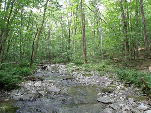 Terry Brook Forest : Sandgate : Bennington County : Vermont