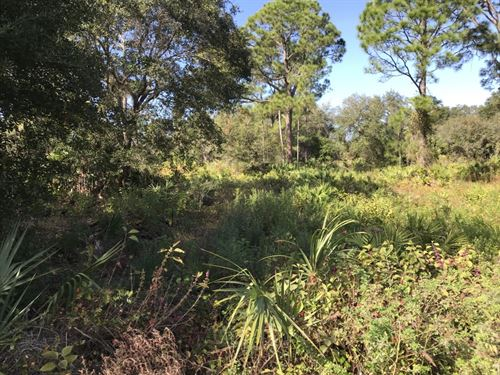 Oversized Lot Near New Homes /Power : North Port : Sarasota County : Florida