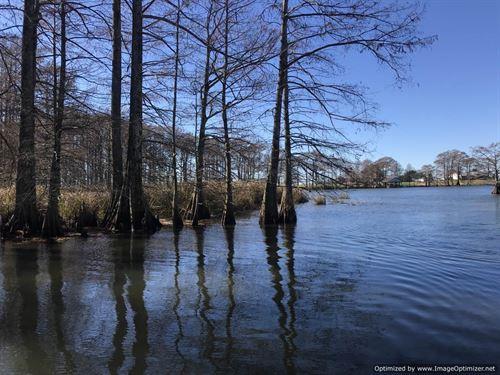Astonishing Lake Views With Acreage : Saint Joseph : Tensas Parish : Louisiana