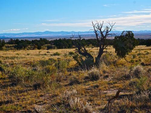 Beautiful St Johns AZ Lot With Lots : Saint Johns : Apache County : Arizona