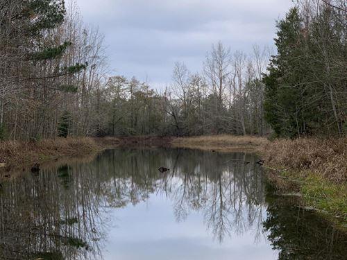 Limestone Creek Timber, Hunting : Westville : Walton County : Florida