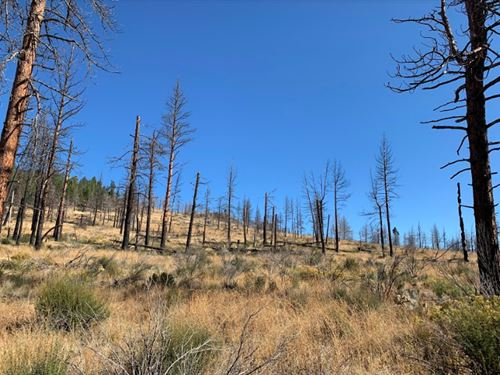 2.55 Ac Cabin In The Wood For You : Chiloquin : Klamath County : Oregon
