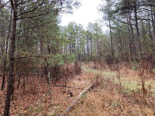 Wooded Acreage : Anderson : South Carolina
