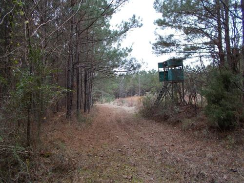40 Acres Hunting Property Copiah : Hazlehurst : Copiah County : Mississippi