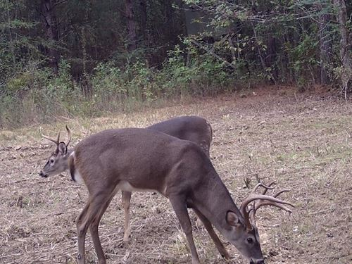 12 Acres Lincoln County MS : Wesson : Lincoln County : Mississippi
