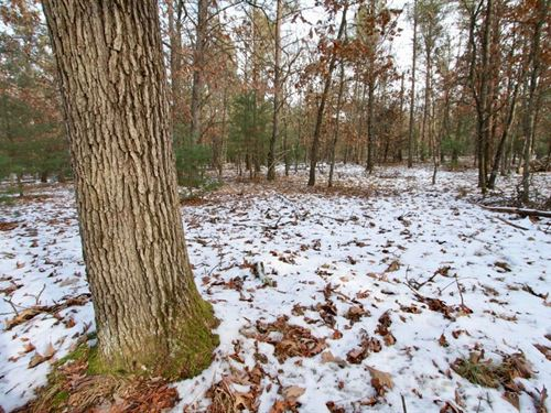 Buildable Lot 2 Within City Limits : Friendship : Adams County : Wisconsin