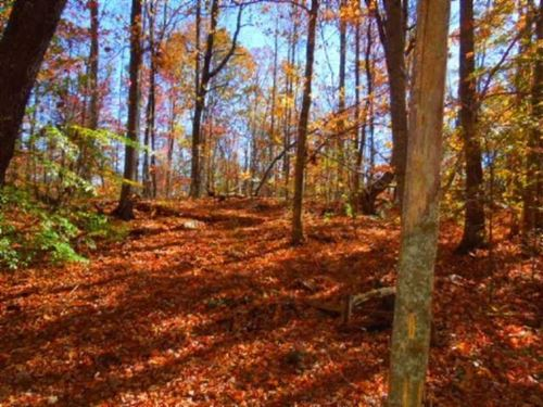 Beautiful 40 Acre Hunting or Home : Sparta : White County : Tennessee