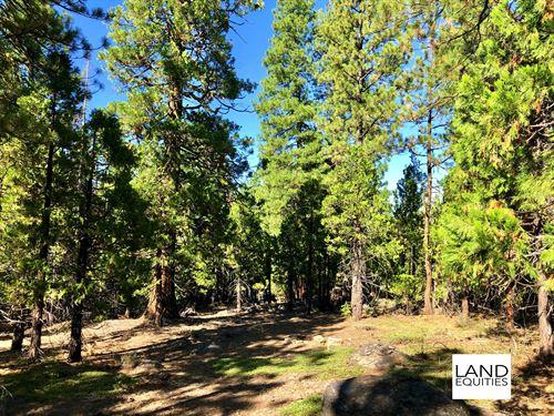 Gorgeous Park Like Setting : Bonanza : Klamath County : Oregon
