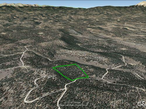 Fully Treed 10 Acres, Electricity : Weston : Las Animas County : Colorado