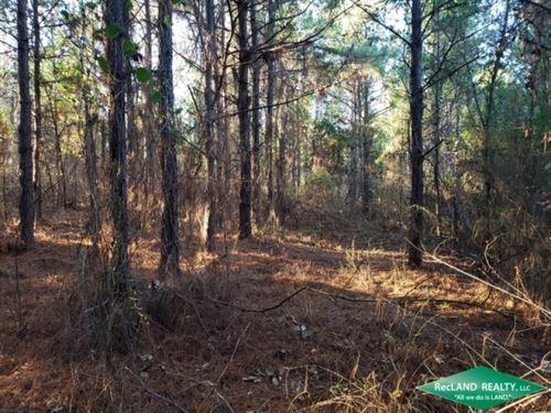 7.3 Ac, Wooded Home Site Tract Nea : Sterlington : Union Parish : Louisiana