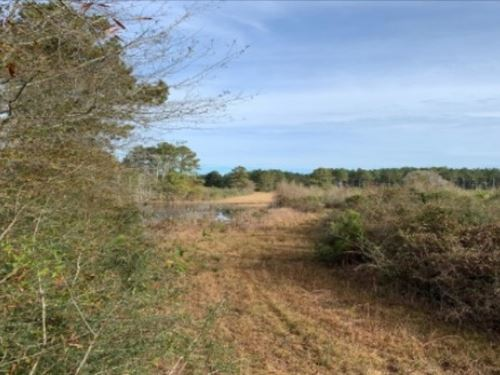 29.5 Acres In Walthall County In Ty : Dexter : Walthall County : Mississippi