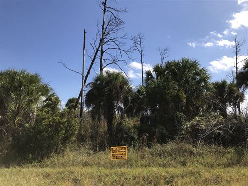 Huge Corner, Camp, Invest, Off Grid : North Port : Sarasota County : Florida