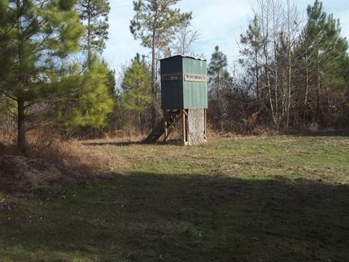Very Private Hunting Land : Cascilla : Tallahatchie County : Mississippi