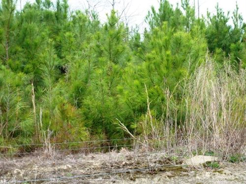 Undeveloped Land, Clear Crops : Chinquapin : Duplin County : North Carolina