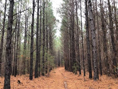Tract 7988, New River Property : Winfield : Marion County : Alabama