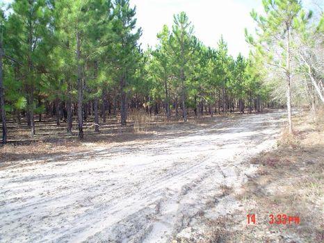 Planted Pines, Abundant Wildlife : Hawkinsville : Pulaski County : Georgia