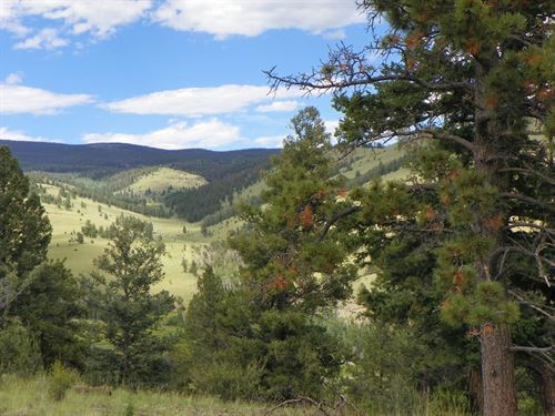 Hunt Elk, Deer, Bear, Mountain Lion : Saguache : Colorado