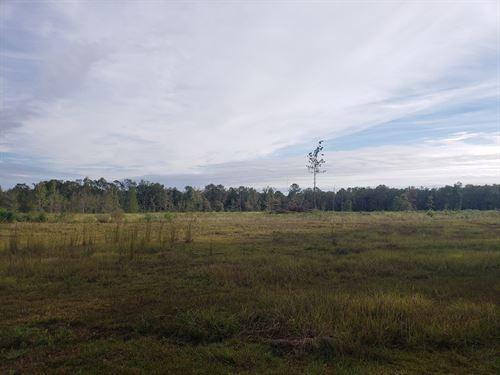 Home And Land in Slocomb, Alabama : Slocomb : Geneva County : Alabama