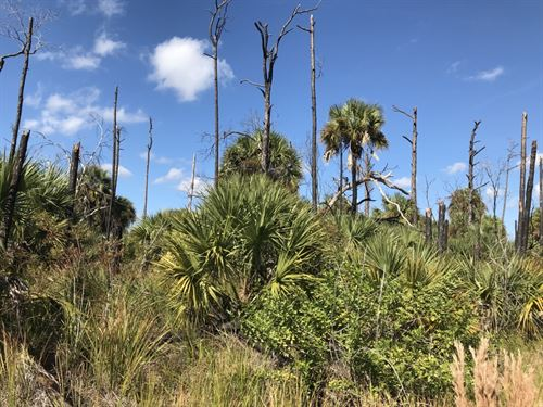 Investment Lot / Off Grid Homestead : North Port : Sarasota County : Florida