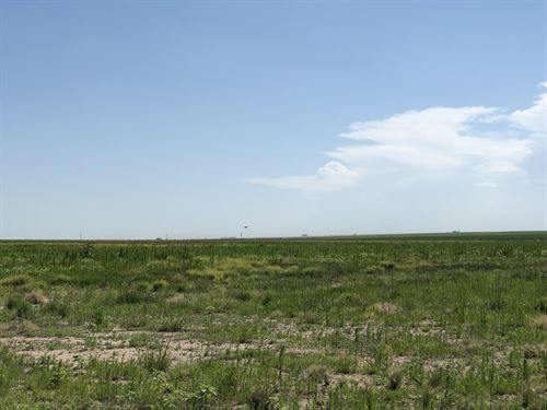Grant County Crop, Grass, & Hunt : Ulysses : Grant County : Kansas