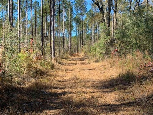 36 Acres Amite County, MS Land : Magnolia : Amite County : Mississippi