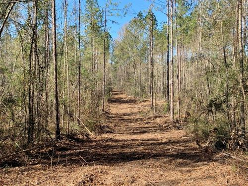 48 Acres Amite County, MS Timber &a : Magnolia : Amite County : Mississippi