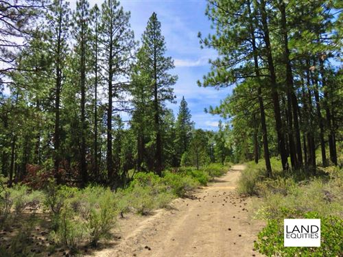 Wooded Lot With Seasonal Creek : Beatty : Klamath County : Oregon