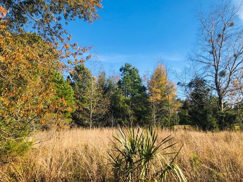 High Springs, FL Vacant Land : High Springs : Alachua County : Florida