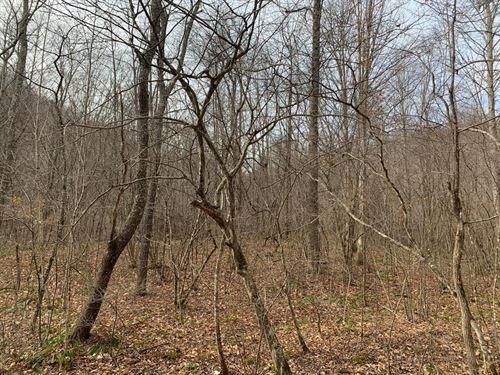 6.869 Recreational Wooded Property : North Tazewell : Tazewell County : Virginia