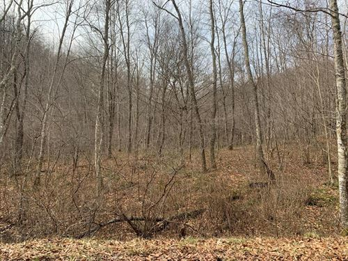5.793 Acres Recreational Land Mud : North Tazewell : Tazewell County : Virginia