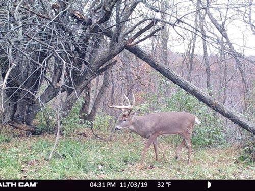 Prime Ridgetop Hunting Land : Gays Mills : Crawford County : Wisconsin