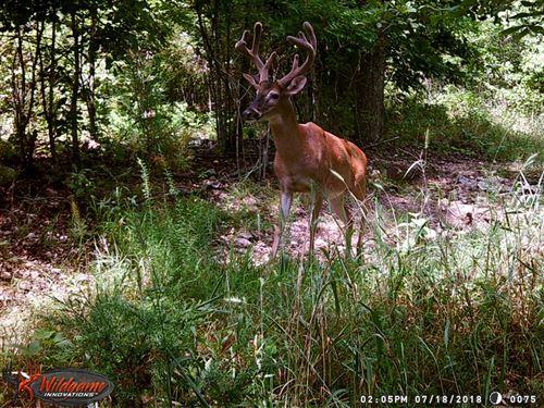 43 Acres, Spring, Deer, Turkey, Hu : Winona : Oregon County : Missouri