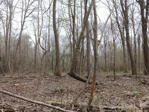 242.6 Acres In Kemper County In Pre : Preston : Kemper County : Mississippi