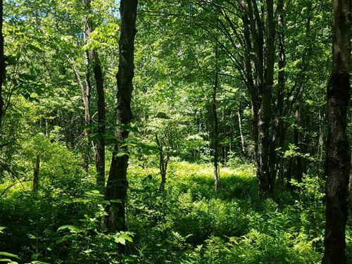 McDonald Woodlands : Steuben : Oneida County : New York