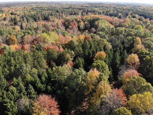 95 Acre Hunting Property : Reed City : Lake County : Michigan