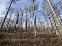 3400 Acres At Walker Farms In Montg : Kilmichael : Montgomery County : Mississippi