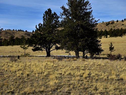 Lots of Trees & Great Access : Hartsel : Park County : Colorado