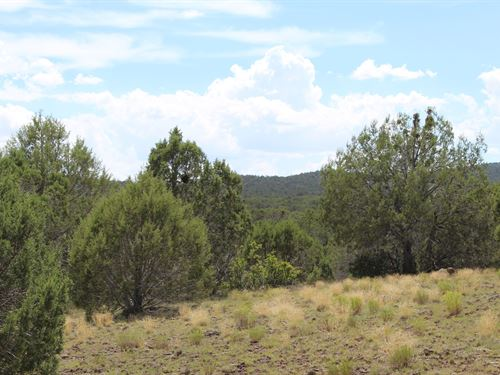 Hunting Land in Northern AZ : Peach Springs : Mohave County : Arizona