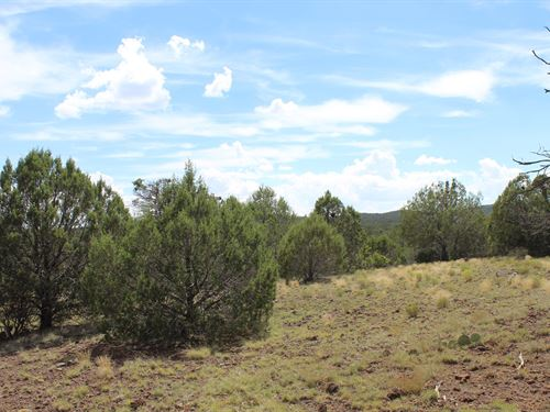 100+ Mountain Acres Peach Springs : Peach Springs : Mohave County : Arizona