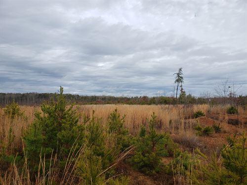 New Year Investment : Scottsville : Buckingham County : Virginia