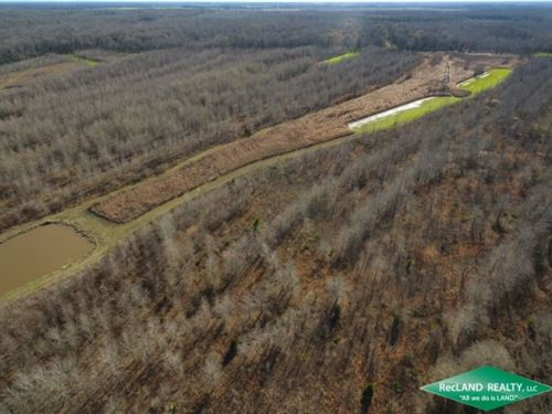 246 Ac, Premium Hunting Tract : Saint Joseph : Tensas Parish : Louisiana