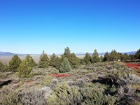 Amazing Views, Tall Trees, $548/Mo : Termo : Lassen County : California
