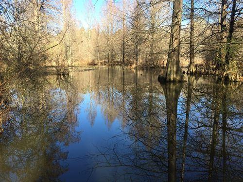 East Texas Land, Creek, Huge : Linden : Cass County : Texas