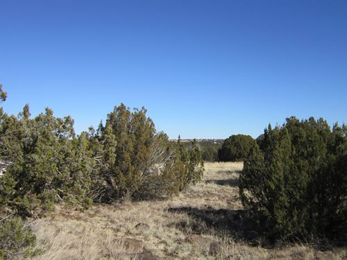.20 Acres to Explore and Grow : Show Low : Navajo County : Arizona