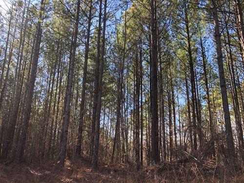 Natural Bridge Farm : Natural Bridge : Winston County : Alabama