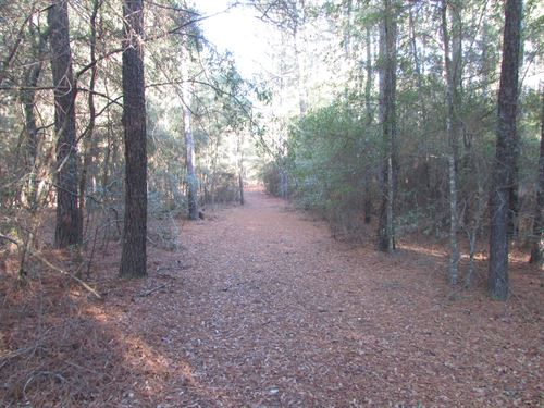 90.70 Acres in Mayesville, SC : Mayesville : Lee County : South Carolina