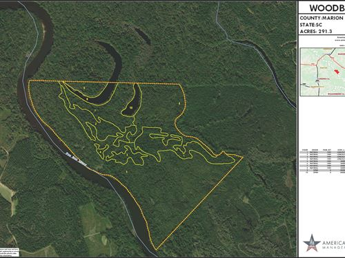 291.20 Acres in Conway, SC : Conway : Marion County : South Carolina