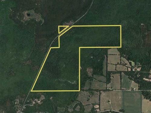 265 Acres Bailey Grade : Greenville : Madison County : Florida